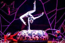OVO - Cirque du Soleil